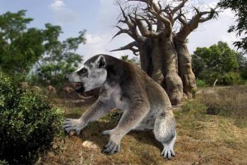 Мегаладапис Эдвардса — огромный древний лемур