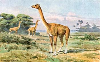 Альтикамелус — «гибрид верблюда с жирафом»