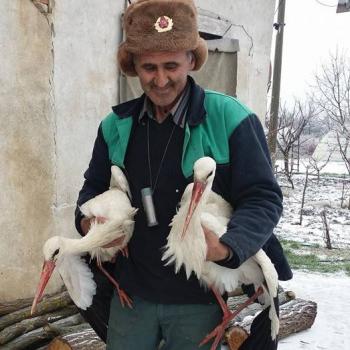 Во время мартовских морозов жители Болгарии спасли более 40 замерзших аистов
