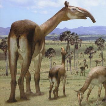 Литоптерны: Древние верблюды с хоботом