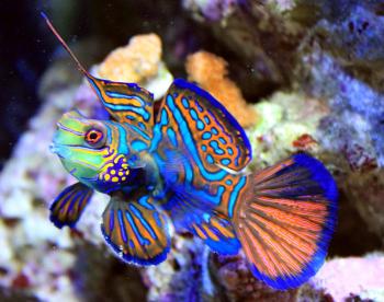 15 самых красочных морских существ