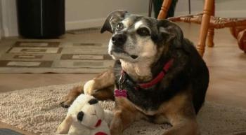 В Канаде собаку пустили проститься с ее умершим хозяином, с которым она прожила 13 лет