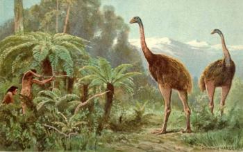 Моа — птицы-исполины