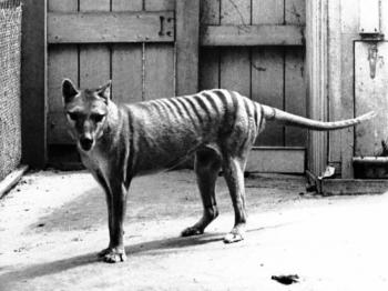 Вперед в прошлое: О «воскрешении» вымерших животных