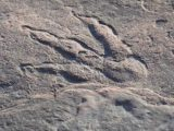 4-летняя девочка нашла след динозавра на пляже 215 миллионов лет назад