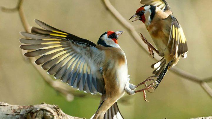 Фотограф использует камеру, чтобы сделать снимки удивительных диких птиц в саду – все из окна кухни